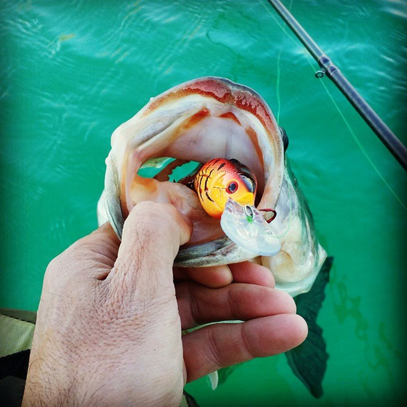 They love Howeller Dream Classic Livingstonlures Bluesprings Bassfishing Bassfishingtackle Teamlivingston