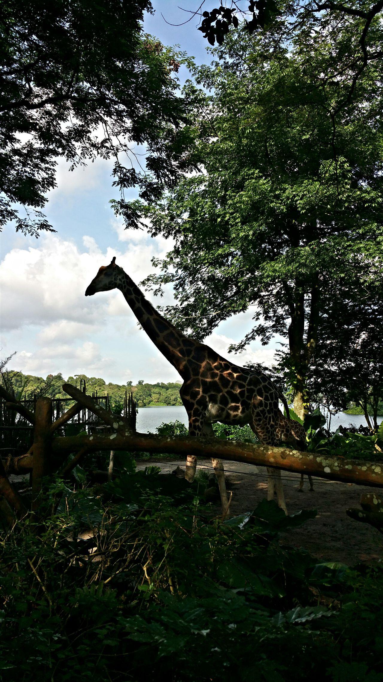 Randomshot Singapore Singapore Zoological Garden Taking Photos Animals