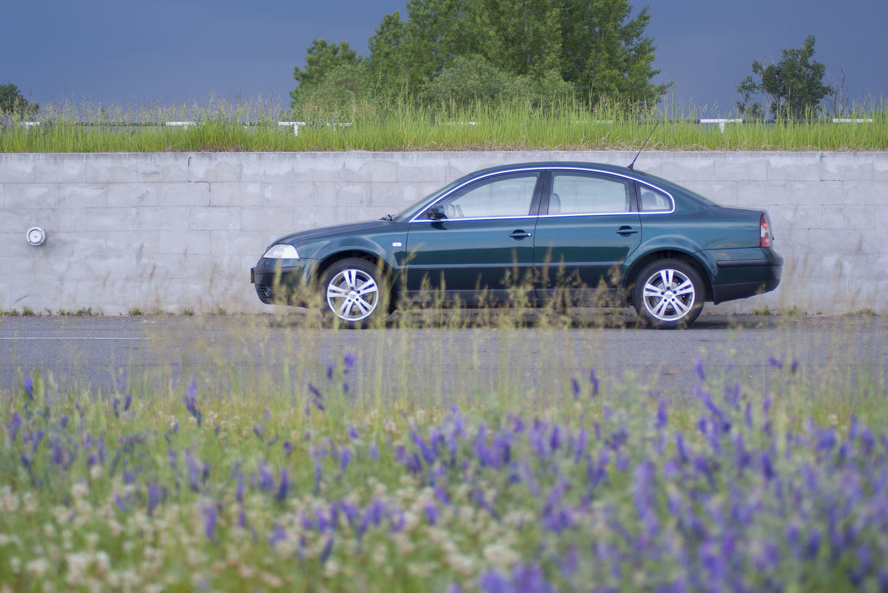 Car Covered Day Field Flower Green Green Car Meadow Meadow Flowers Nature Nice Car Outdoors Overcast Overcast Day Overcast Sky Overcast Weather ❤ Passat Passat B5 Passat B5.5 Plant Sedan Sky Transportation Volkswagen Volkswagen Passat