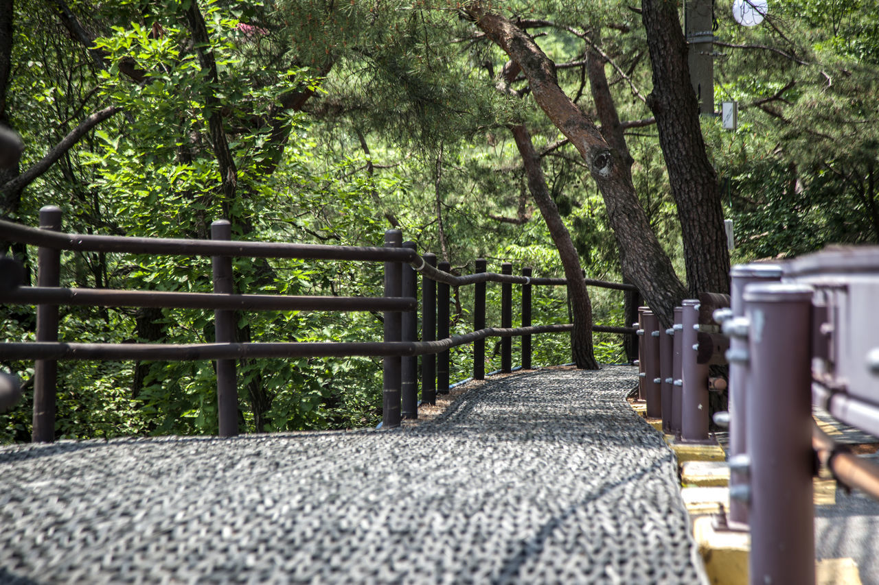 Absence Beauty In Nature Bukhansan Day Diminishing Perspective Doseonsa Empty Green Color Growth Nature No People Outdoors Park Park Bench Seat Selective Focus The Way Forward Tranquil Scene Tranquility Tree Walkway