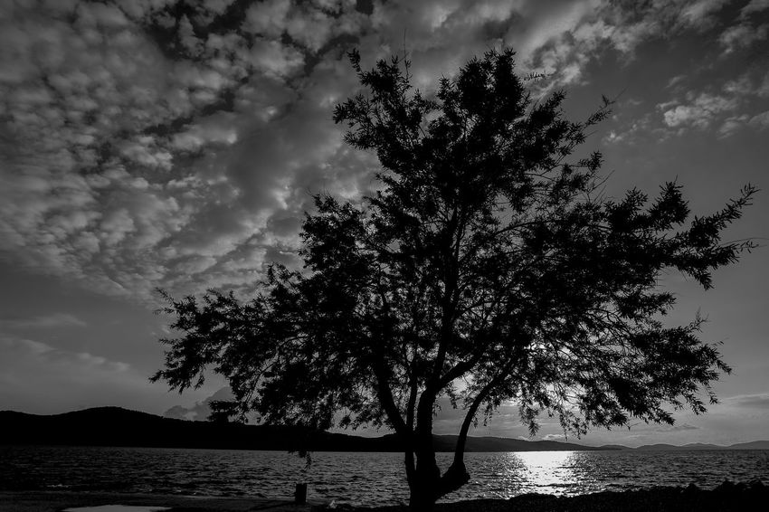 Nature Tree Water Silhouette Outdoors Sky Beauty In Nature No People Lake Scenics Day Landscape Branch Tree Trunk Horizon Over Water