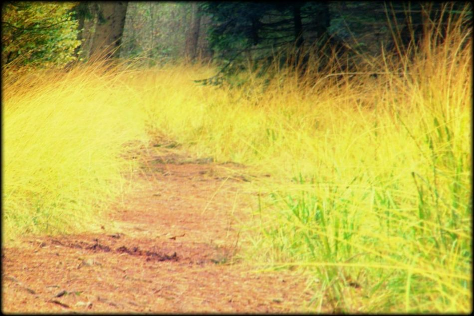 Forest Roud Grass Beauty In Nature Outdoors No People