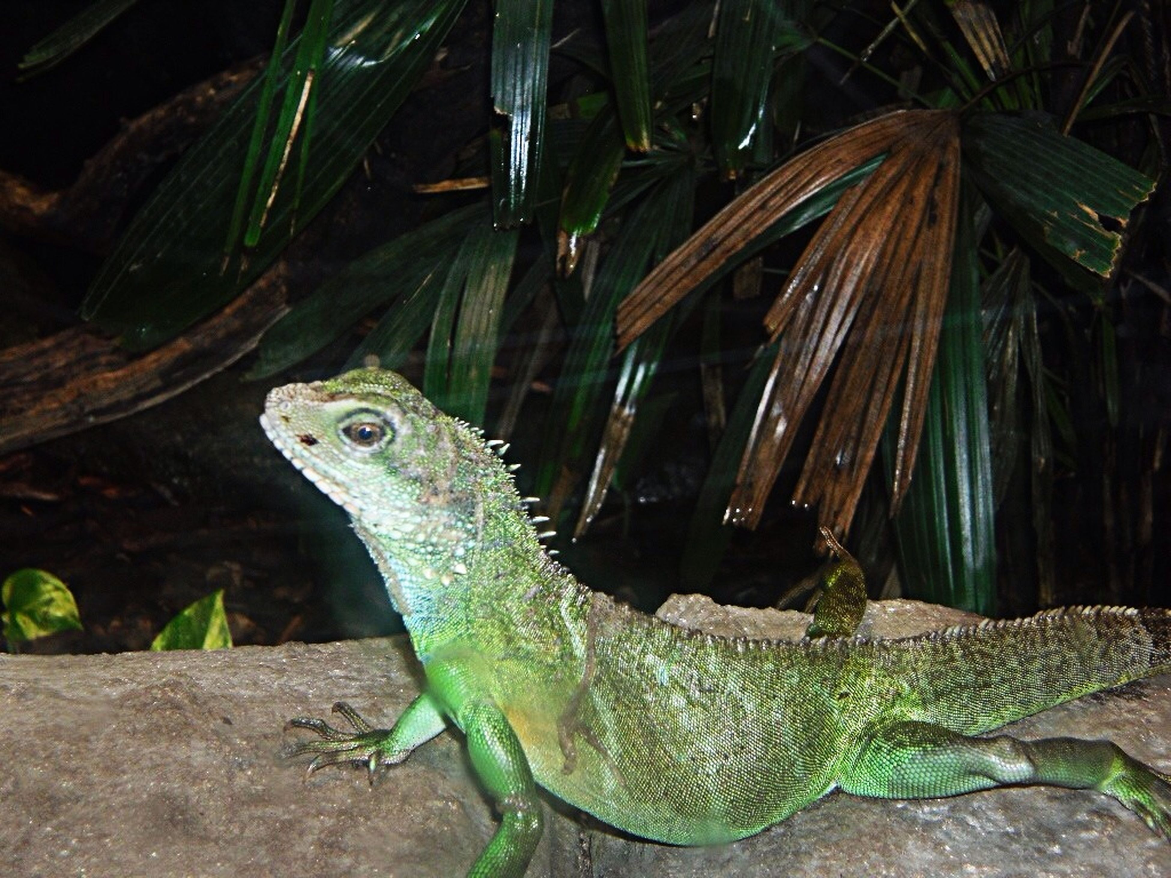 animal themes, animals in the wild, one animal, reptile, wildlife, lizard, green color, nature, plant, close-up, water, turtle, outdoors, side view, no people, frog, day, crocodile, amphibian, animal head