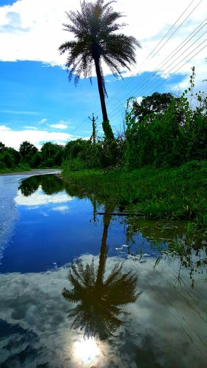Reflection Perfection  Palm Frond Blue Sky And White Clouds Perfect Shot Perfection Is Everywhere