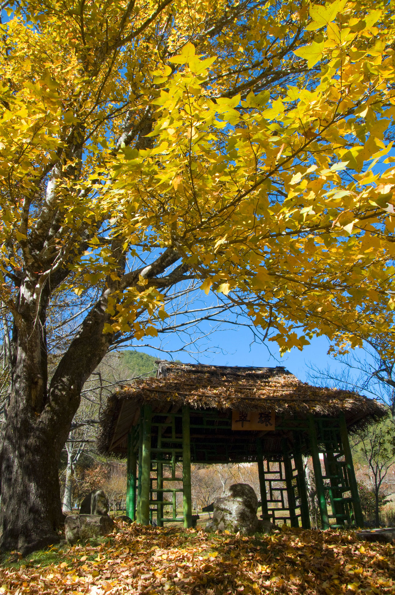 Architecture Atmosphere Autumn Autumn Building Building Exterior Built Structure Cool Day Fall Go Sightseeing Landscape Leaf Leisure Life Maple Mountain Nature No People Outdoors Travel Travel Destinations Tree Tree