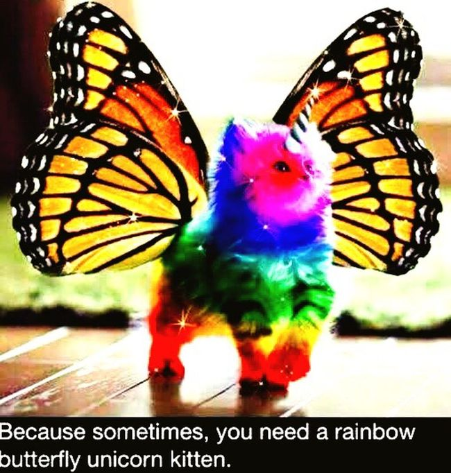 Just fabulous!!!! Unicorn Kitty Butterfly RareBreed Just Fabulous Darling! Make My Day
