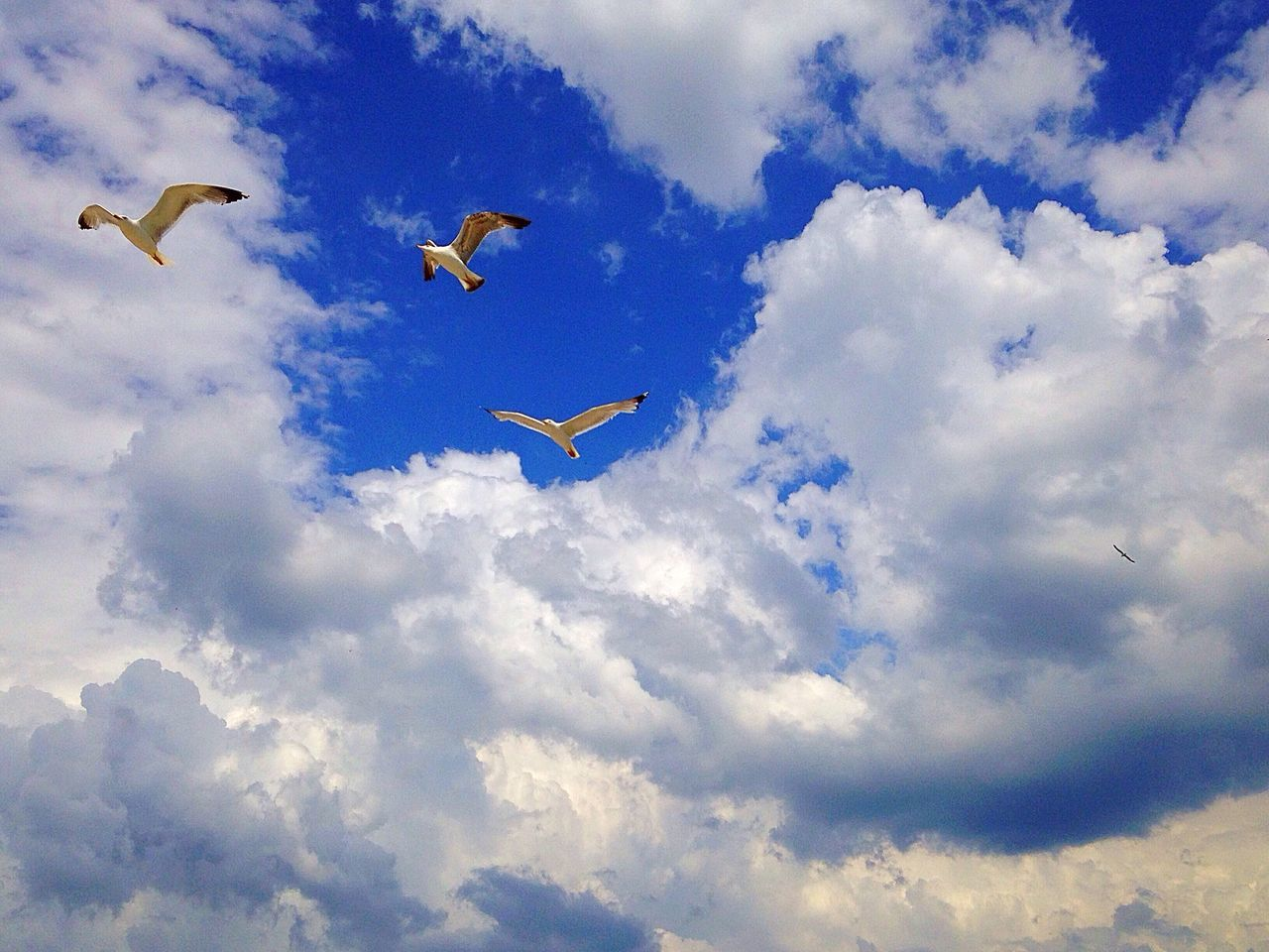Flight🕊🕊 Gull Gulls Flight Fly Summer 82/100happydays Sea Sky Skyporn Nature IPhoneography IPhone5 Iphoneonly Landscape Sky_collection Sky And Clouds Sea And Sky Birds Blue MyPhotography