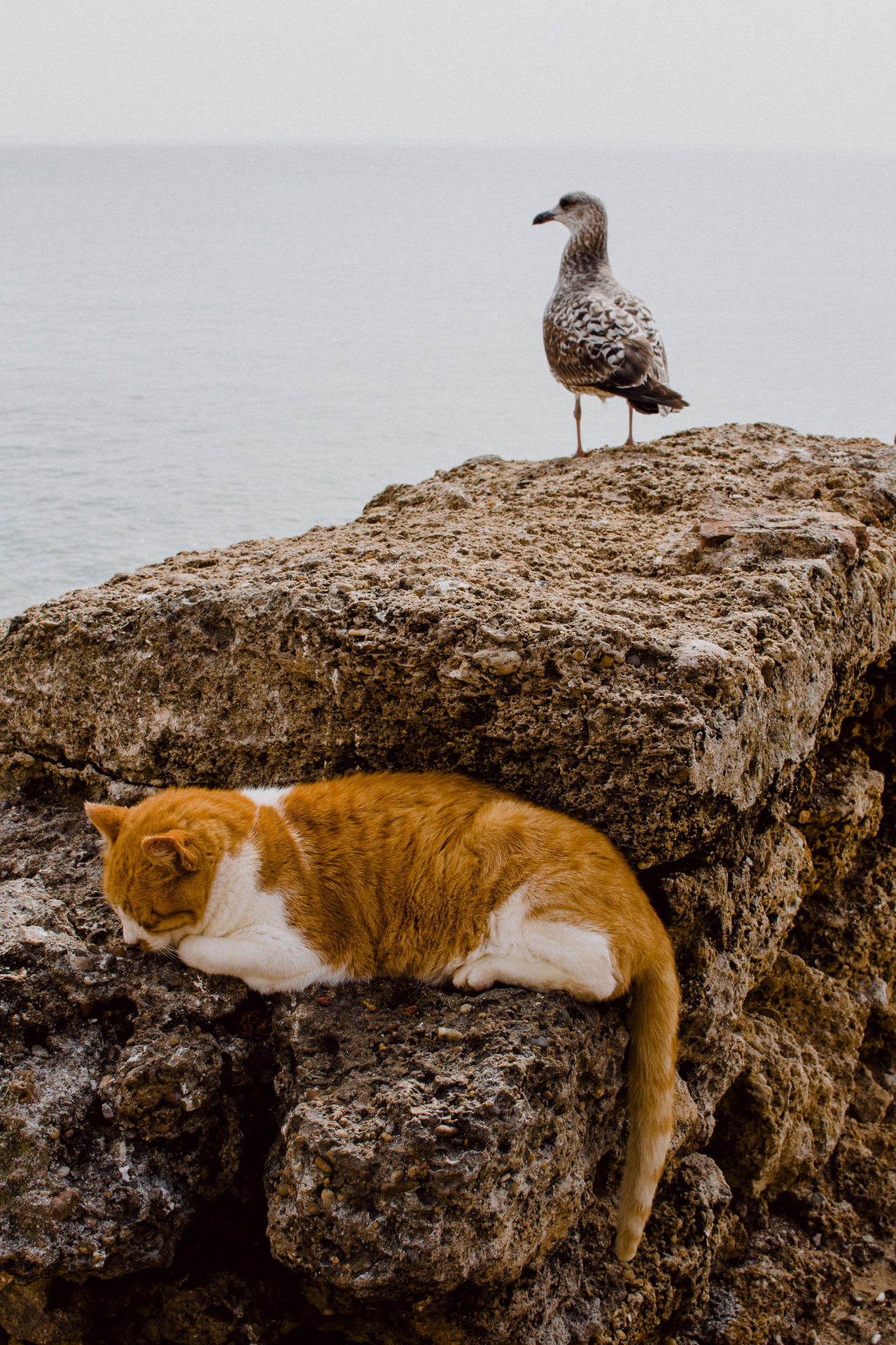 Cat and seagull Animal Themes Animal Wildlife Animals In The Wild Beauty In Nature Bird Day Mammal Nature No People One Animal Outdoors Perching Sea Water