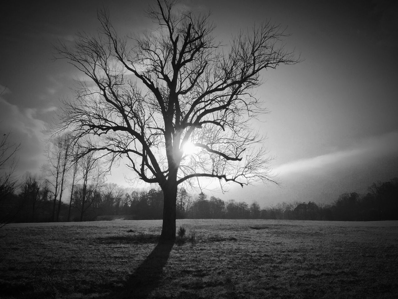 Silhouette Bare Trees On Field