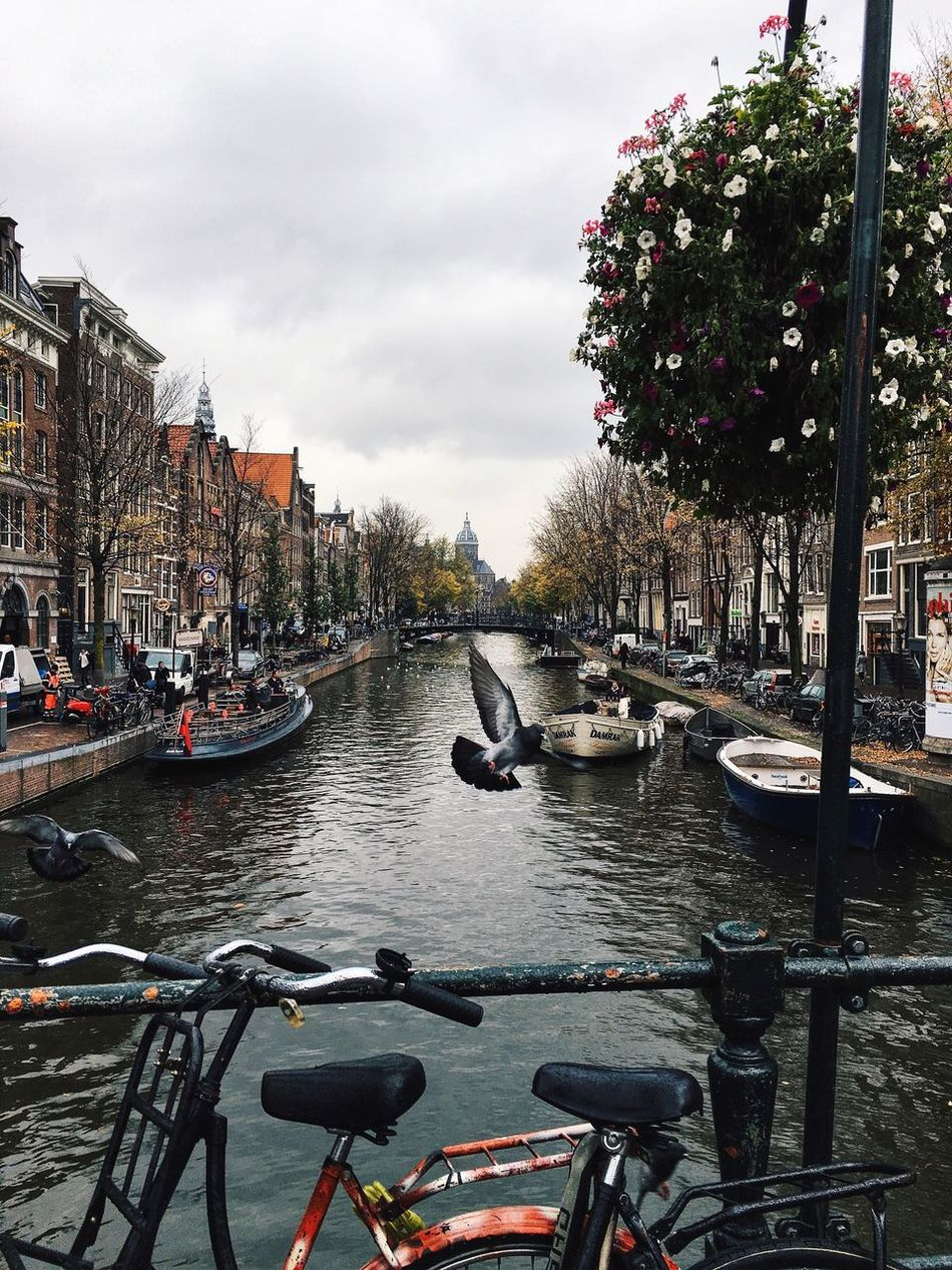 Beautiful stock photos of amsterdam, Animal Themes, Animal Wildlife, Animals In The Wild, Bicycle