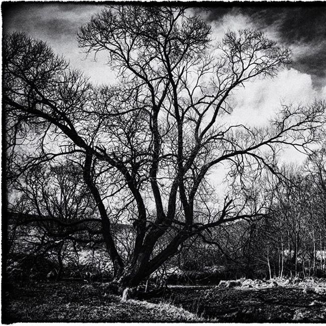 Tree Blackandwhite Loves_trees_rural Postprocessing Tree Landscape Pureslovakia Trees Spring Thisisslovakia