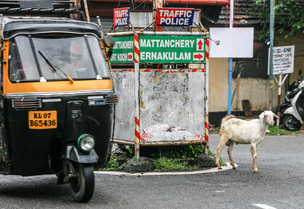 Animal Themes Goat India Indian Kochi Outdoors Pets Reiselust Street Street Photography Streetart Streetphotography Traffic Traffic Police  Travellover Travellovers Tuk Tuk On The Road Road Indian Road Travel
