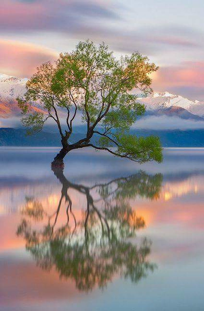 tree, landscape, sunset, reflection, cloud - sky, beauty in nature, tranquility, scenics, nature, sky, pinaceae, mountain, outdoors, idyllic, water, lake, tranquil scene, travel destinations, no people, blue, tree area, day