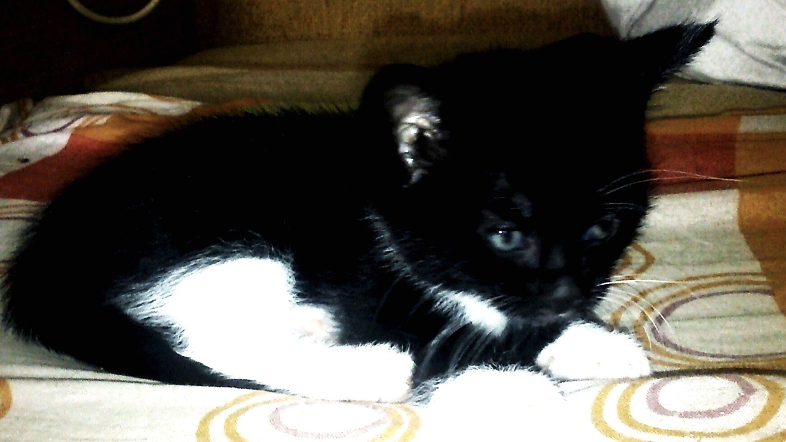 My Name Is... Pumcia Love Cat