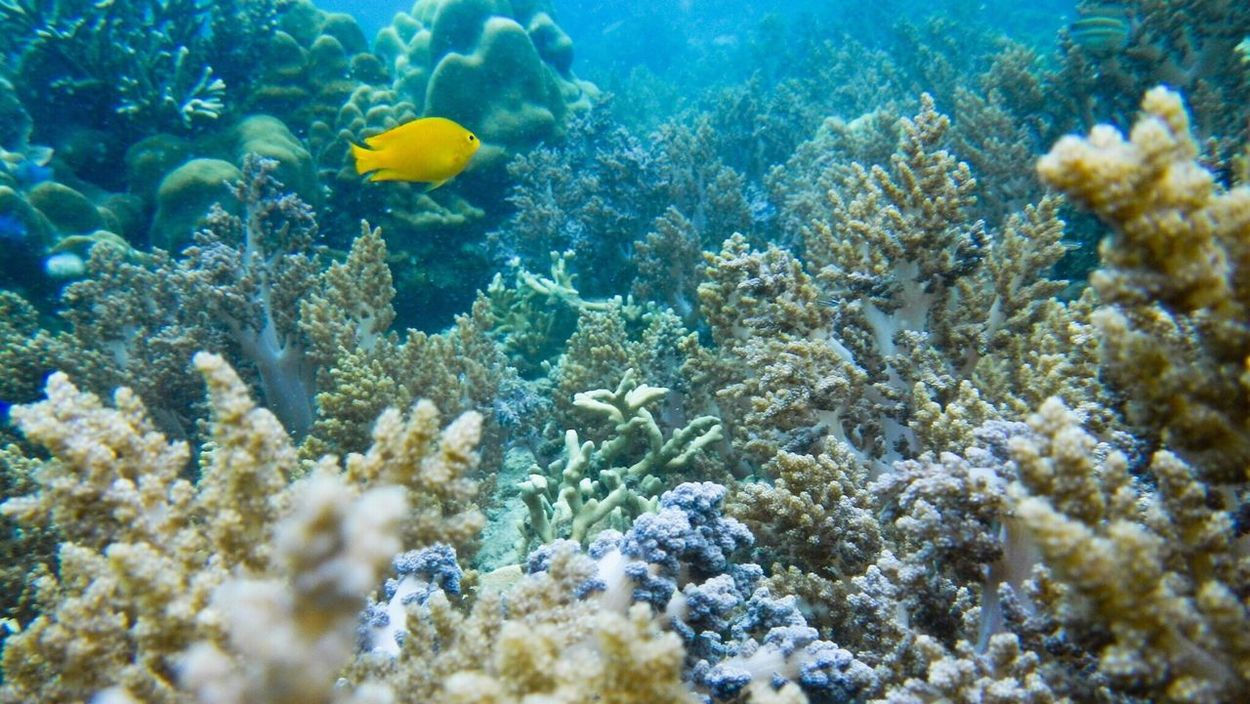 Sea fishes,Colorfull Coral and Reef under the sea in south of Thailand. Coral Reef Sea Life Ocean Fish Underwater Under Sea World Water World  Sea Fish South Thailand