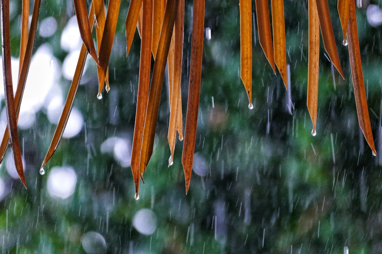 drop, nature, outdoors, raindrop, no people, day, wet, growth, close-up, beauty in nature, winter, hanging, cold temperature, tree, fragility, water, freshness