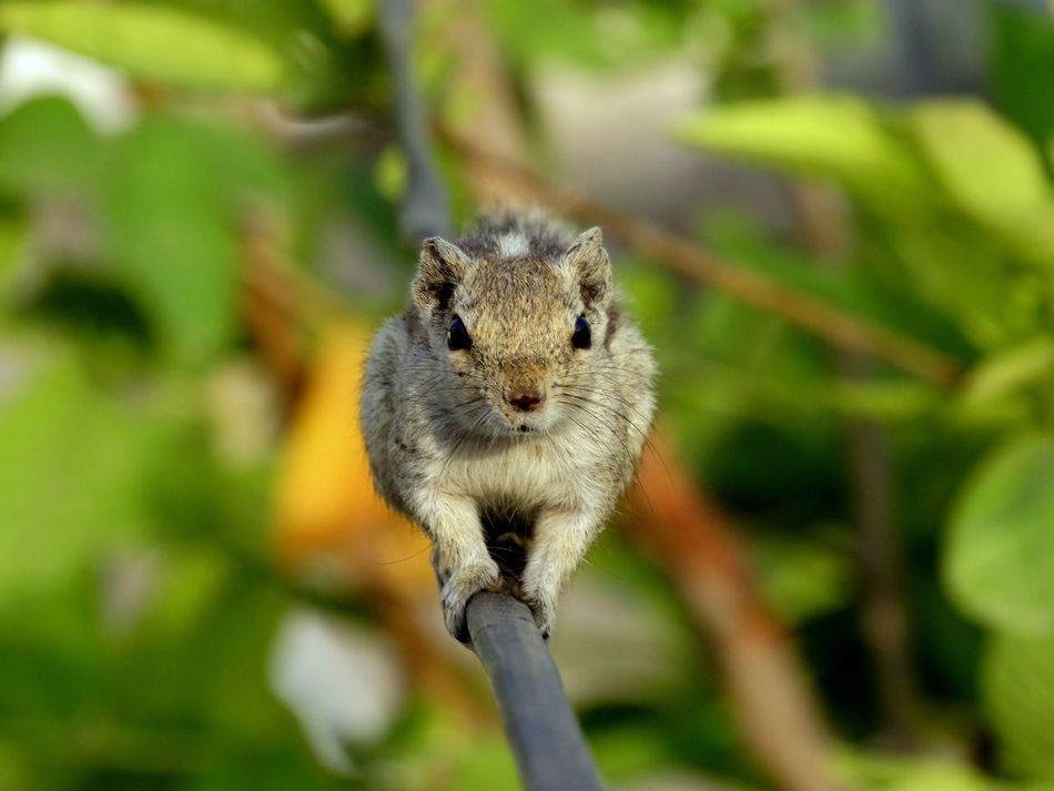 Beautiful stock photos of eichhörnchen, one animal, animal themes, animals in the wild, wildlife