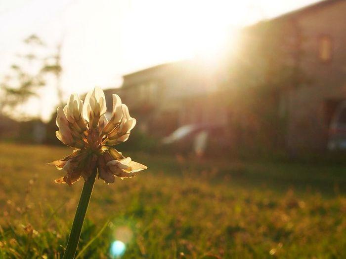 Sunset Japan Tadaa Community EyeEm Best Shots - Landscape EyeEm Nature Lover Sunshine Landscape Pray For Nepal