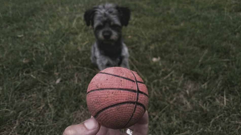 Beautiful stock photos of puppy, Animal Themes, Ball, Close-Up, Day