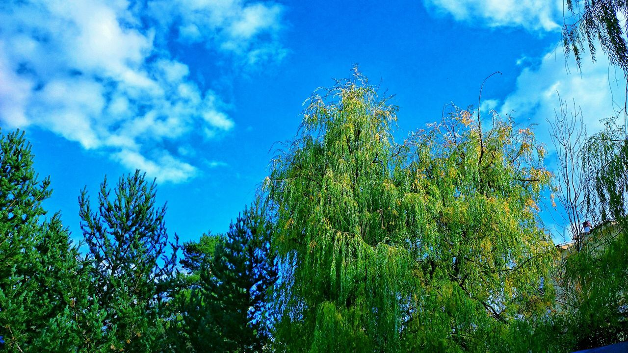 nature, blue, low angle view, sky, growth, beauty in nature, day, cloud - sky, no people, tree, tranquility, outdoors, green color, plant, scenics, freshness