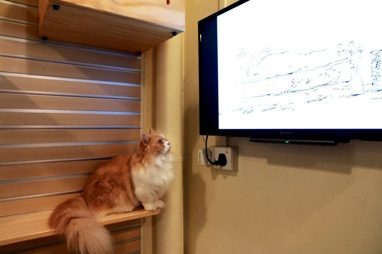 Even cats like to watch television... :) Enjoying Life Cats Cute Animals Cute Cats Eyem Cute Cats Relaxing Cheese!