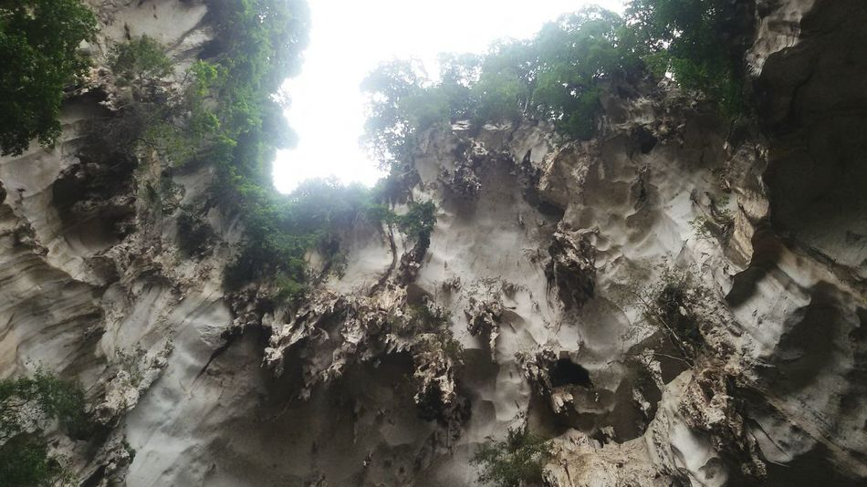 Tree Nature Growth No People Beauty In Nature Day Outdoors Backgrounds Close-up Sky Stairs Monkeys Plants Kuala Lumpur Malaysia  Batu Caves -Malaysia Kuala Lumpur Malaysia  Nature Beauty In Nature Cave Caves Photography Mountain