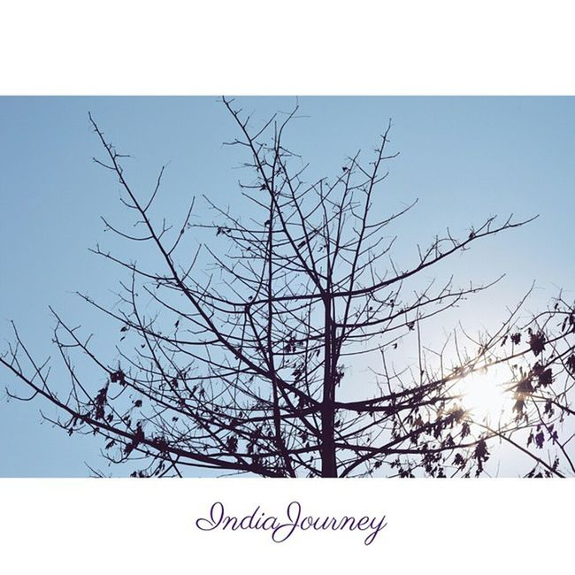 Someone's sitting in the shade today because someone planted a tree a long time ago - Warren Buffett IndiaJourney WarrenBuffett