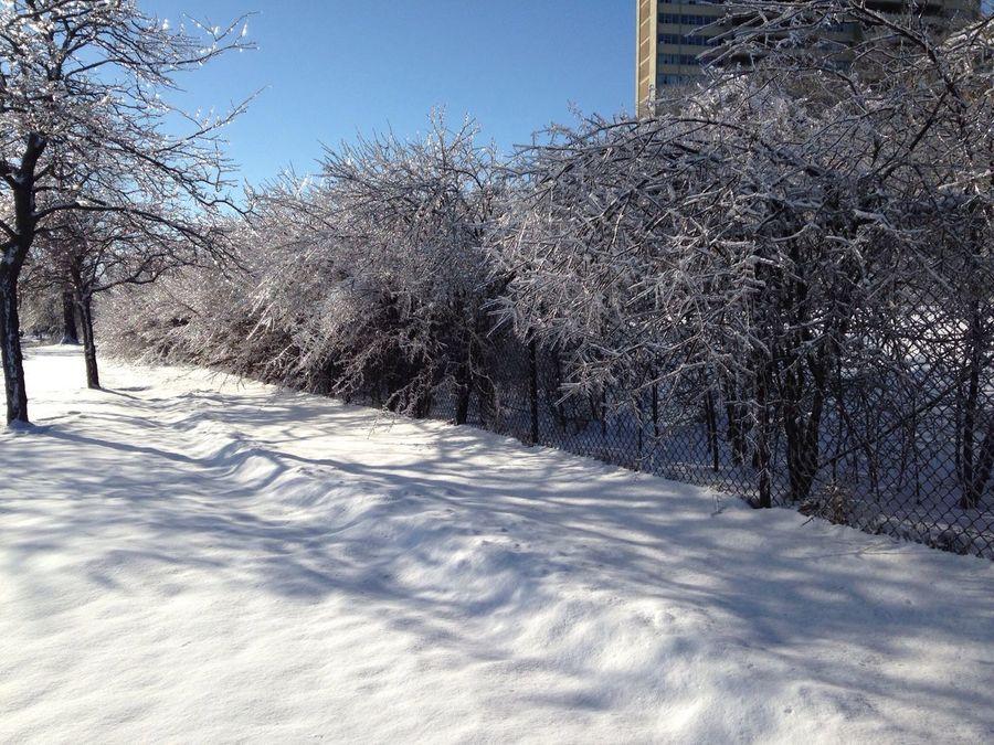 #trees #frozen #winter Hipstamatic