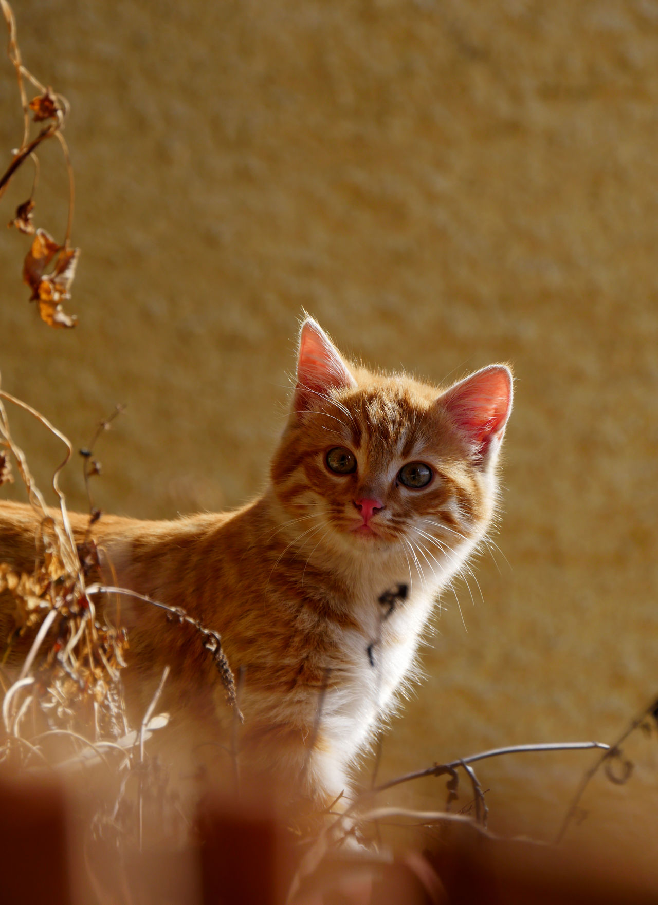 Beautiful stock photos of baby katzen, Animal Themes, Day, Domestic Animals, Domestic Cat