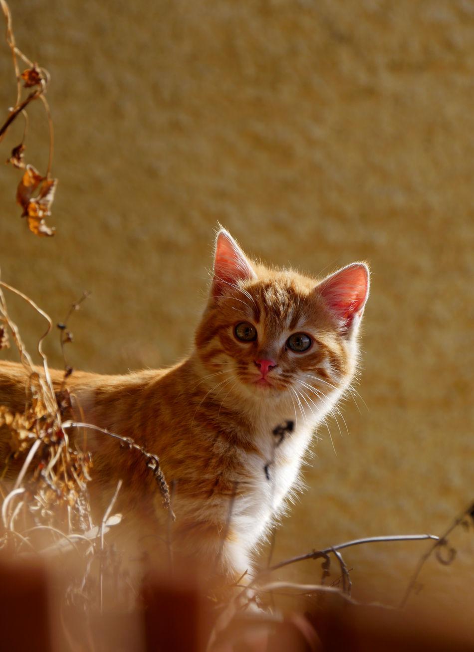 Beautiful stock photos of baby katzen, Animal Themes, Day, Domestic Animals, Domestic Cat