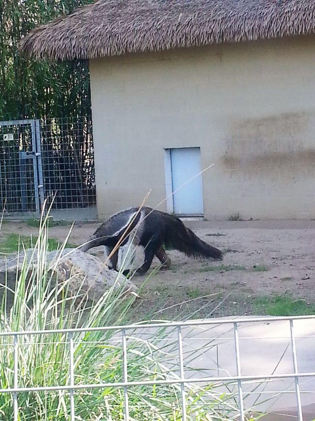 Big Anteater Anteater 🐜🐜🐜