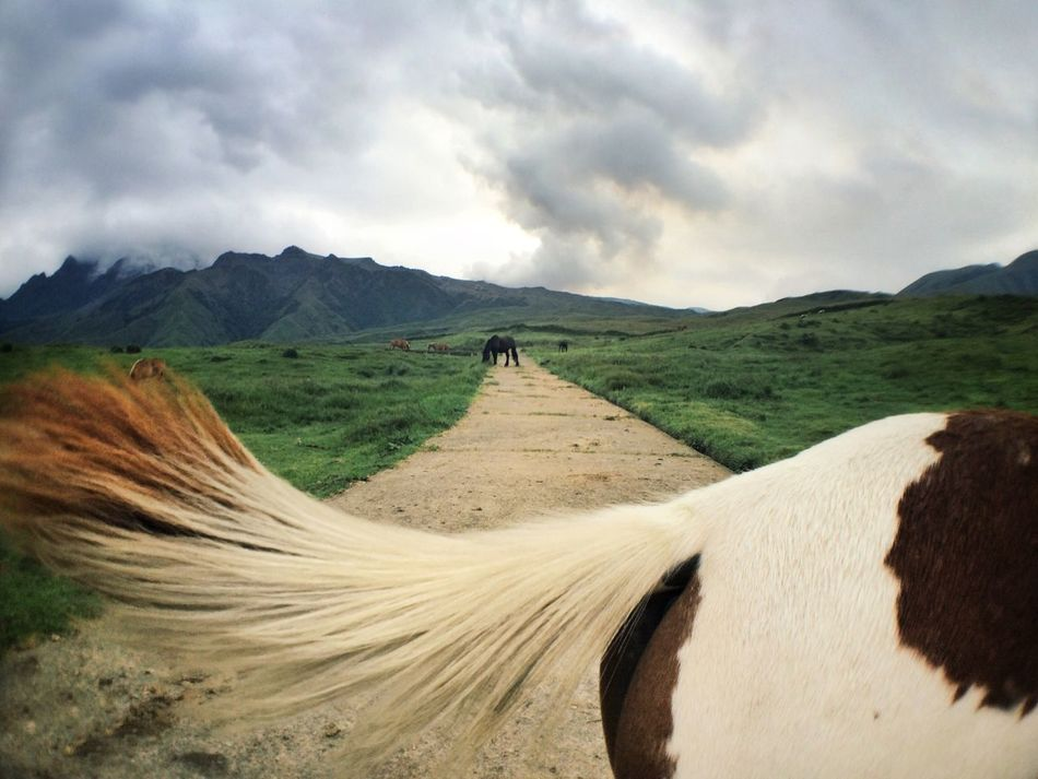 Beautiful stock photos of volcano, Animal Hair, Animal Themes, Cropped, Day