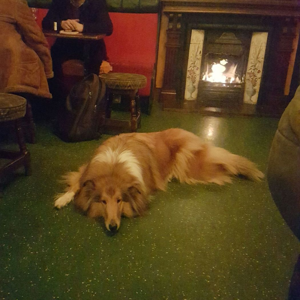 English Pub Camden Town Camden Local Pub Dog  Dog Pub Lassie Indoors  Pets Sitting One Animal Fireplace Real Fire Full Length Local Warm Cosy British Boozer Drinks With Friends