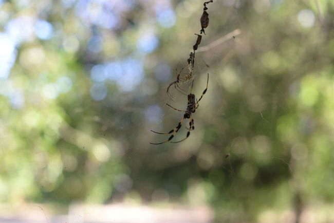web Animal Themes Animals In The Wild Beauty In Nature Close-up Day Focus On Foreground Fragility Insect Intricacy Nature One Animal Spider Spider Web Zoology