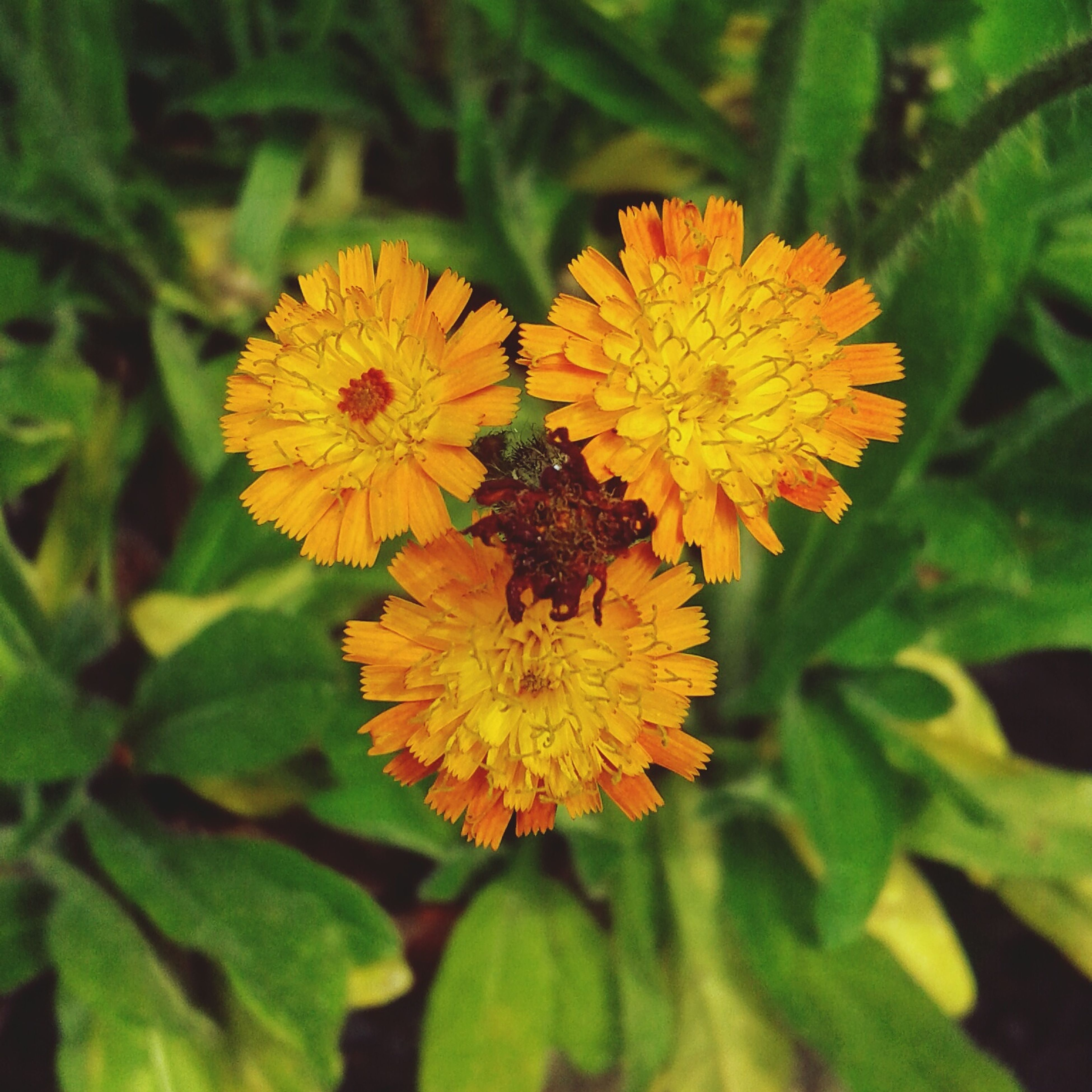 flower, petal, freshness, fragility, flower head, yellow, growth, beauty in nature, leaf, close-up, plant, blooming, nature, orange color, focus on foreground, high angle view, in bloom, green color, park - man made space, pollen