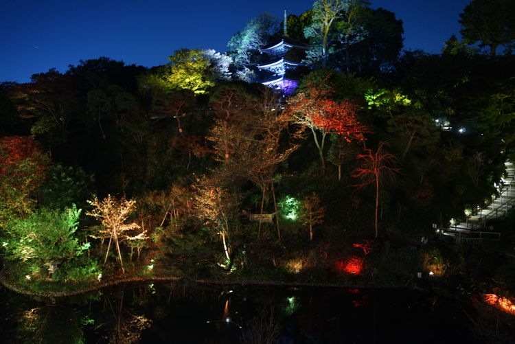 Japan Chinzansou Illustration Light Lights Night Lights Nightphotography Hotel Garden EyeEm Best Shots