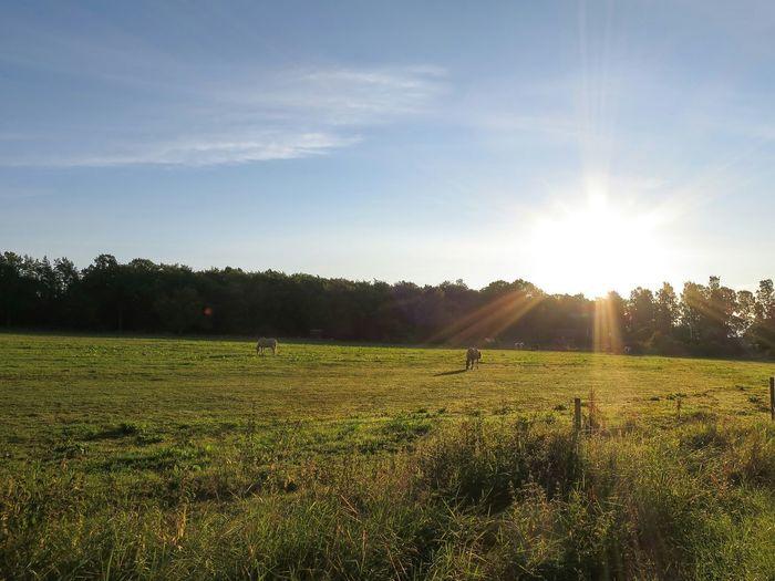 Horses Morning Treat Field Morning Sun Landscape Commuting Cycling
