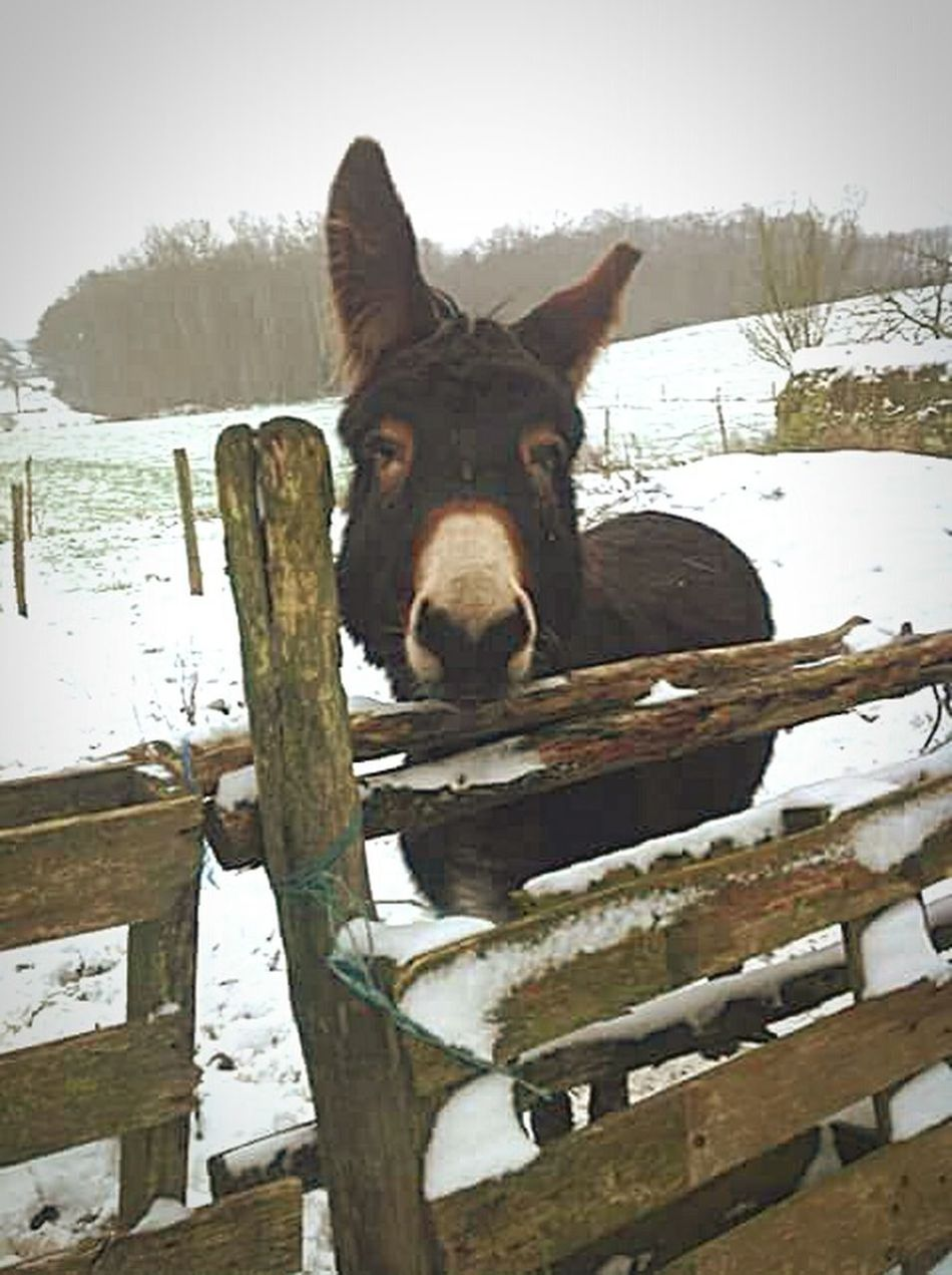 Playing With The Animals Cute Pets Cheese! Lafertebernand Funinthesnow EyeEm Nature Lover Eyemgallery