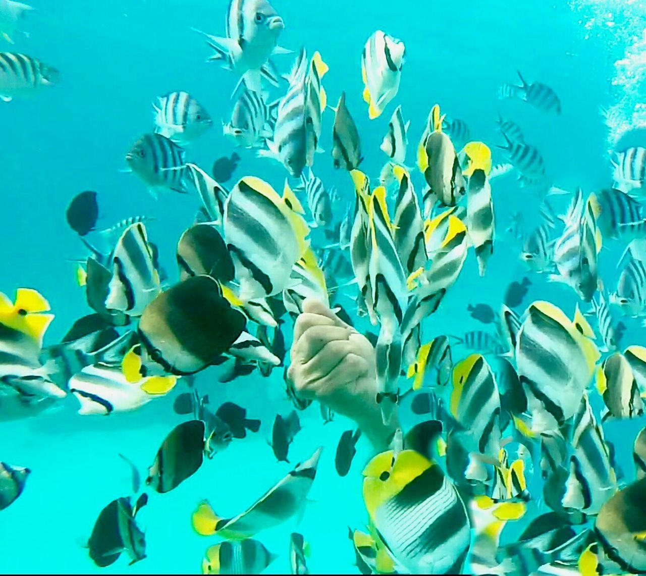 underwater, fish, water, swimming, large group of animals, school of fish, sea life, undersea, animals in the wild, blue, sea, animal themes, animal wildlife, nature, snorkeling, real people, aquarium, beauty in nature, day, outdoors