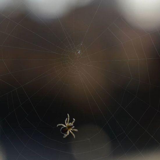 Network Inprogress Spider Web Macro Nofilter Nofilterneeded Nikon Nikonphotography Nikontop Nikon_photography_ Mynikonlife Mynikon Nikoncanada Nikonnofilter
