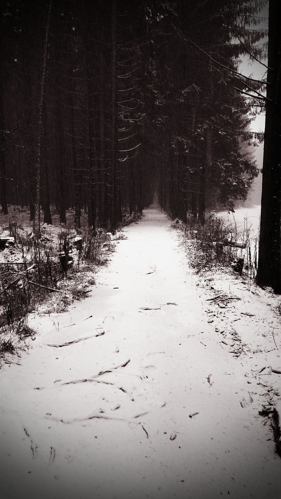 Nature Tree Snow Winter Beauty In Nature Outdoors Landscape Cold Temperature Growth Forest Blackandwhite Walking Zuberec Roháče Morning Morning Walk