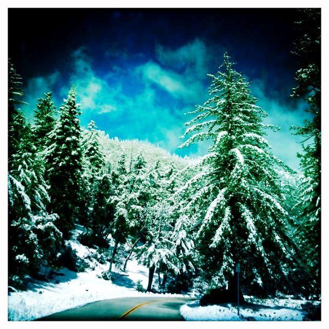 Winter Wonderland ❄ Trail Ride Snow ❄ Showcase: February