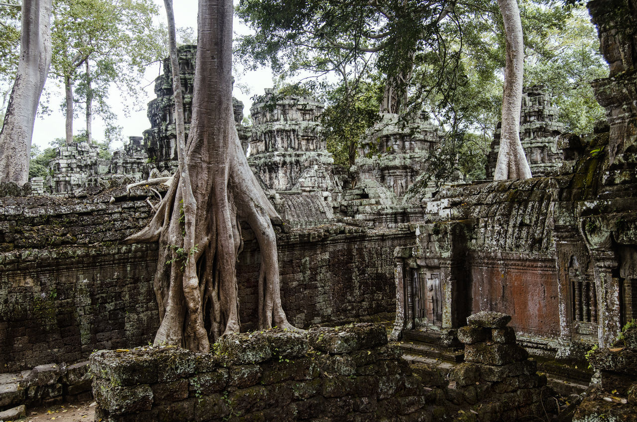 Ta Prohm, Angkor Wat, Siem Reap, Cambodia Ancient Civilization Architecture Building Exterior Built Structure Cambodia History Holiday Nature No People Old Ruin Outdoors Place Of Worship Religion Root Siem Reap Siemreap Spirituality Statue Ta Prohm Tourism Travel Travel Destinations Tree Tree Trunk The Great Outdoors - 2017 EyeEm Awards