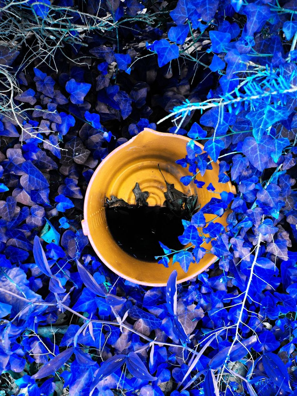 Abundance Backgrounds Beauty In Nature Blue Bucket Change Close-up Day Fragility Full Frame Growth Leaf Multi Colored Nature No People Outdoors Plant Color Palette