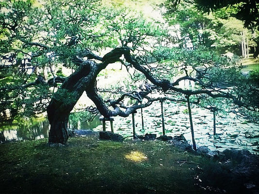 garden at Korakuen by @naka1978