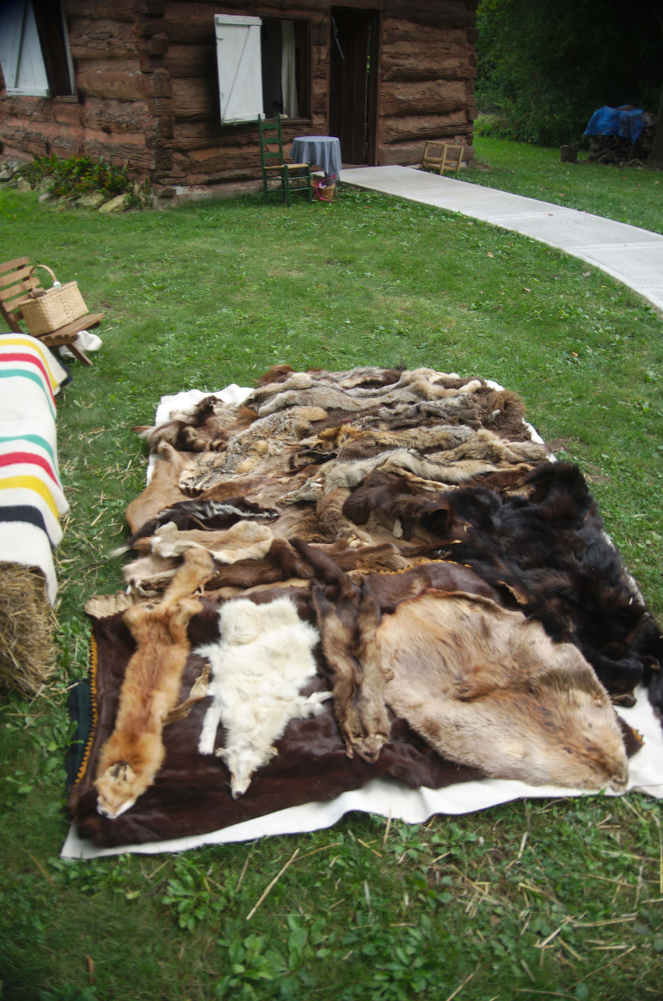 A trappers take Fürs Grass Mammal Nature Outdoors Re-enactors Trapper