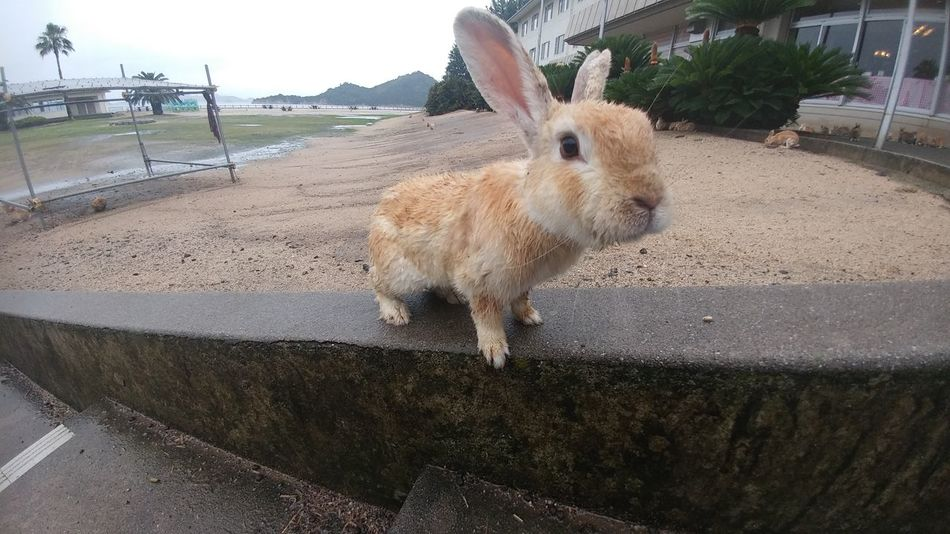 Val  LG  G5se Lgg5se Japan Rabbit
