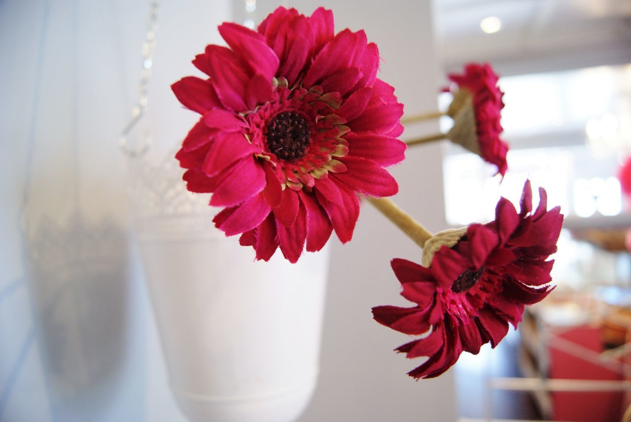 flower, red, beauty in nature, petal, vase, flower head, indoors, no people, nature, close-up, fragility, freshness, day