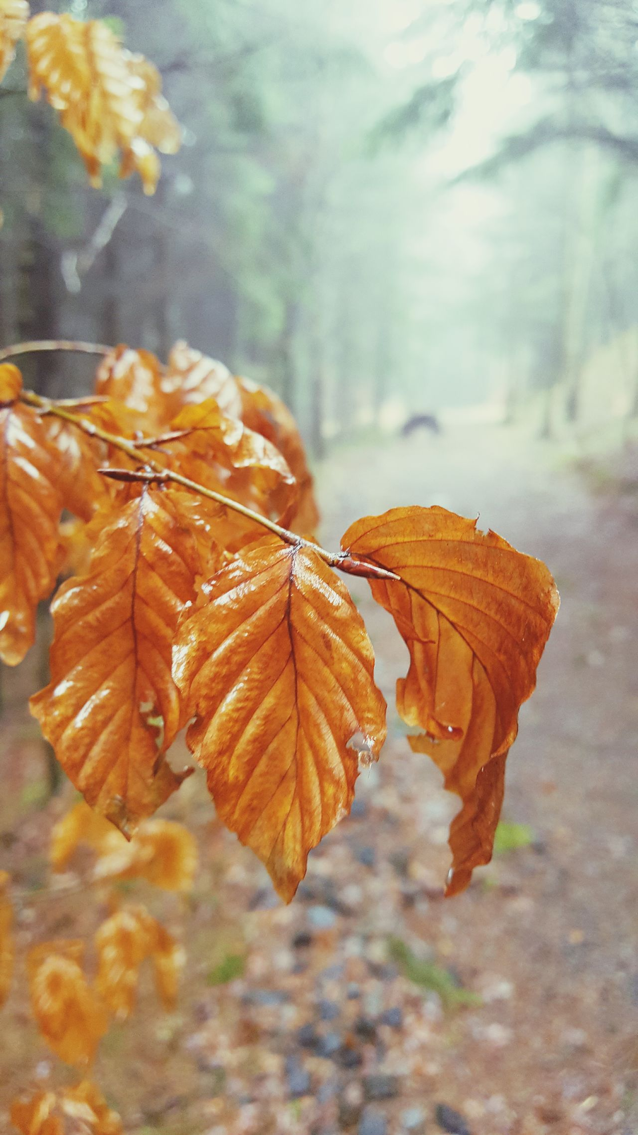 Forest walks and wet Leafs.