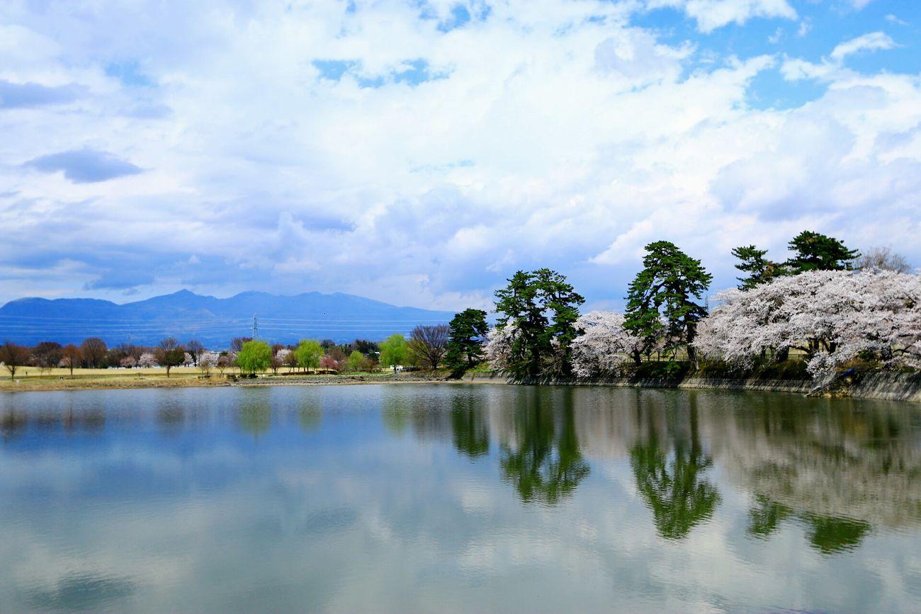 去年の! Enjoying Life Water Lake Park Beautiful Day Nature Cherryblossom 桜 Clouds Clouds And Sky